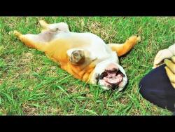 Смешные и Милые Животные 2018 Приколы с Животными 2018 Смешные Собаки и Забавные Кошки