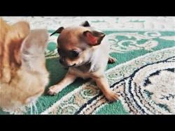 ПРИКОЛЫ с Животными Июнь 2018 Смешные Видео Приколы про животных Первый день Лета