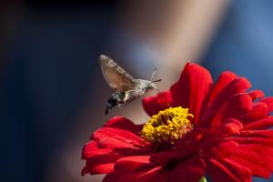Зависнув над цветком