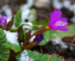 Сюрпризы весны