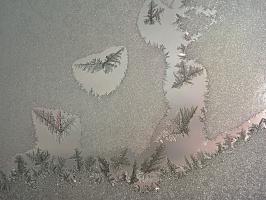 Птицы,...от Мороза!