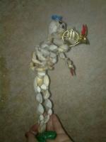 скелет из ракушек