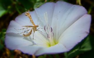 О комариных нарядах