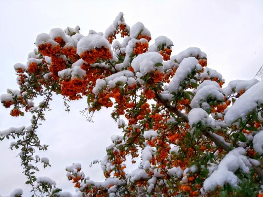 Немного снега
