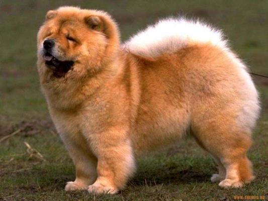 Прелестная Собачка!!! :-)))__________