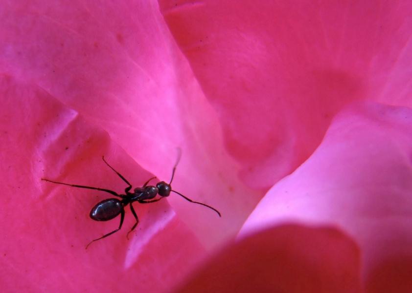 Минотавр из розового лабиринта