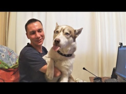 Приколы с животными подборка Смешные Собаки и Щенки Приколы с собаками 2018